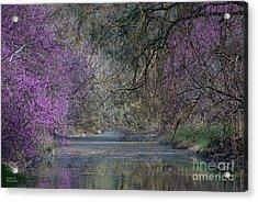 Davis Arboretum Creek Acrylic Print by Diego Re