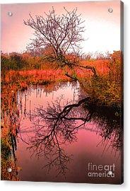 Dawn On The Marsh Acrylic Print by Nick Zelinsky