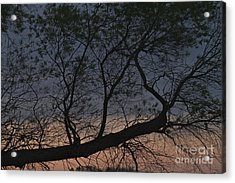 Acrylic Print featuring the photograph Dawn by William Norton