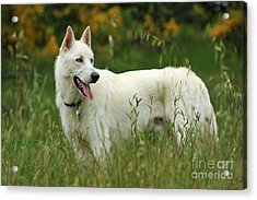 Acrylic Print featuring the photograph Day At The Dog Park by Tyra  OBryant