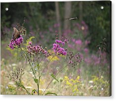 Day In The Meadow Acrylic Print by Trendle Ellwood