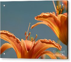 Day Lilies Acrylic Print by Christine Stack