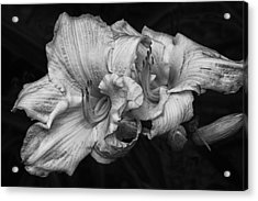 Acrylic Print featuring the photograph Day Lilies by Eunice Gibb