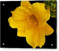Day Lilly 3 Acrylic Print by Barry Jones