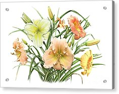 Daylily Bouquet Acrylic Print by Artellus Artworks