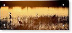 Days End At The Wetlands Acrylic Print