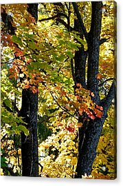Dazzling Days Of Autumn Acrylic Print by Will Borden