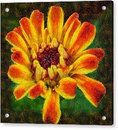 Dazzling Zinnia Acrylic Print