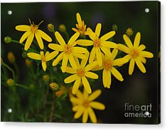 Acrylic Print featuring the photograph Dbg 041012-0281 by Tam Ryan