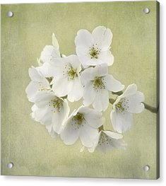 Dc Blossom Acrylic Print by Kim Hojnacki