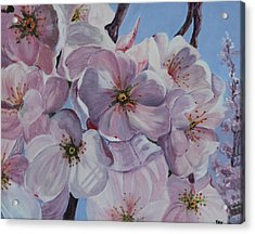 Acrylic Print featuring the painting Dc Cherry Blossoms by Pauline  Kretler