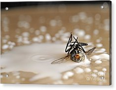 Dead Fly On Milk Drops Acrylic Print by Sami Sarkis