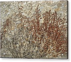 Dead Ivy Acrylic Print