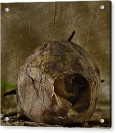 Acrylic Print featuring the photograph Dead Rosebud by Steve Purnell