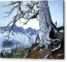 Dead Spruce In Old Forest Fire, Nabob Acrylic Print by David Nunuk