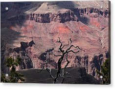 Dead Tree At The Canyon Acrylic Print