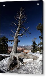 Acrylic Print featuring the photograph Dead Tree Over Bryce Canyon by Karen Lee Ensley