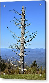 Dead Tree Acrylic Print by Susan Leggett