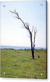 Dead Tree Acrylic Print by Victor De Schwanberg