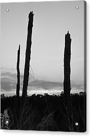 Dead Trees Against The Evening Skies Acrylic Print by Floyd Smith