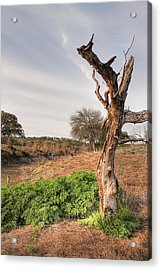 Death Of A Tree Acrylic Print