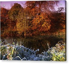 Deciduous Woods, In Autumn With Frost Acrylic Print