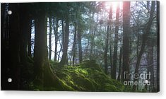 Deep Forest Acrylic Print by Bruno Santoro