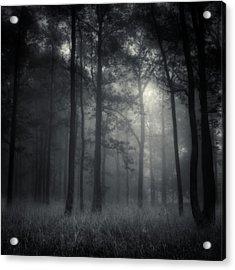 Deep Forest Acrylic Print by Jaromir Hron