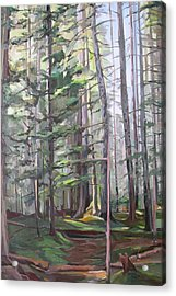 Deep Forest Acrylic Print by Synnove Pettersen