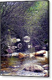 Deep In The Forest Acrylic Print by Guadalupe Nicole Barrionuevo