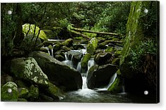 Deep In The Forest Lies A Waterfall   Acrylic Print by Glenn Lawrence