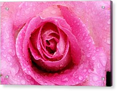 Deep Pink Acrylic Print by