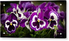 Deep Purple Acrylic Print by Denis Lemay