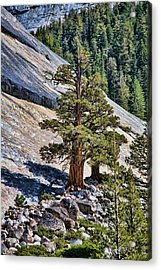 Deep Roots Acrylic Print by Bonnie Bruno