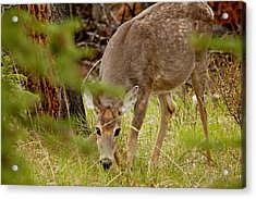 Deer 1661 Acrylic Print by Larry Roberson