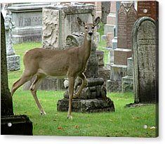 Acrylic Print featuring the mixed media Deer Among The Headstones by Bruce Ritchie