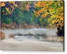 Deer Crossing River Acrylic Print by Dan Friend