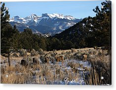 Acrylic Print featuring the photograph Deer Herd by Marta Alfred