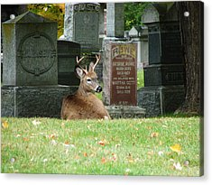 Acrylic Print featuring the mixed media Deer In Cemetery by Bruce Ritchie