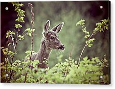 Deer In Forest Acrylic Print by Christopher Kimmel