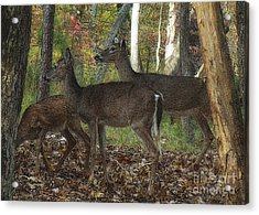 Acrylic Print featuring the photograph Deer In Forest by Lydia Holly