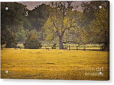 Acrylic Print featuring the photograph Deer In Spring Meadow by Cheryl Davis