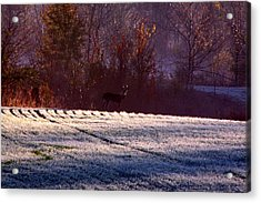 Deer In The Distance Acrylic Print by Jake Busby