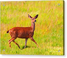 Deer In The Meadow Acrylic Print by Wingsdomain Art and Photography