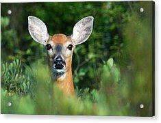 Deer In The Woods Acrylic Print