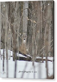 Acrylic Print featuring the photograph Deer In Woods by Steven Clipperton