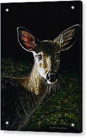 Deer Portrait Acrylic Print by Robert Goudreau