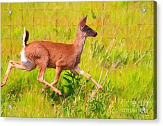 Deer Prancing In The Field Acrylic Print by Wingsdomain Art and Photography