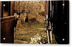 Deer Train Yard In Golden Acrylic Print by Travis Burns