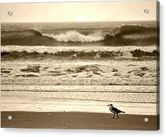 Acrylic Print featuring the photograph Deliberate Solitude by Kelly Nowak